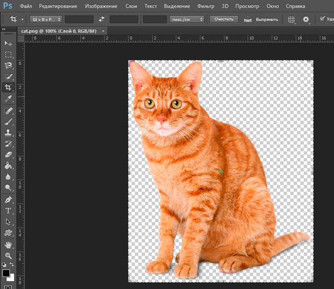 Рыжий кот в Photoshop