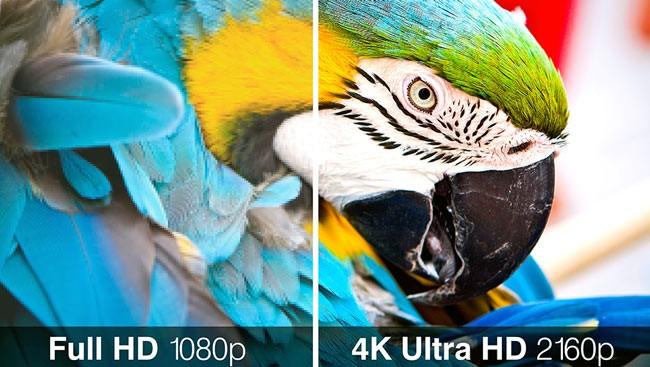 Попугай в 4K