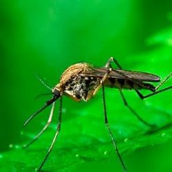 Телевизор LG , отпугивающий комаров