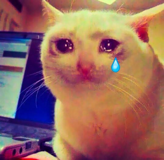 cat-cry