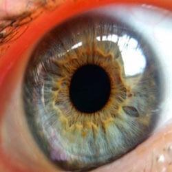 Sony запатентовала глазные линзы со встроенной камерой